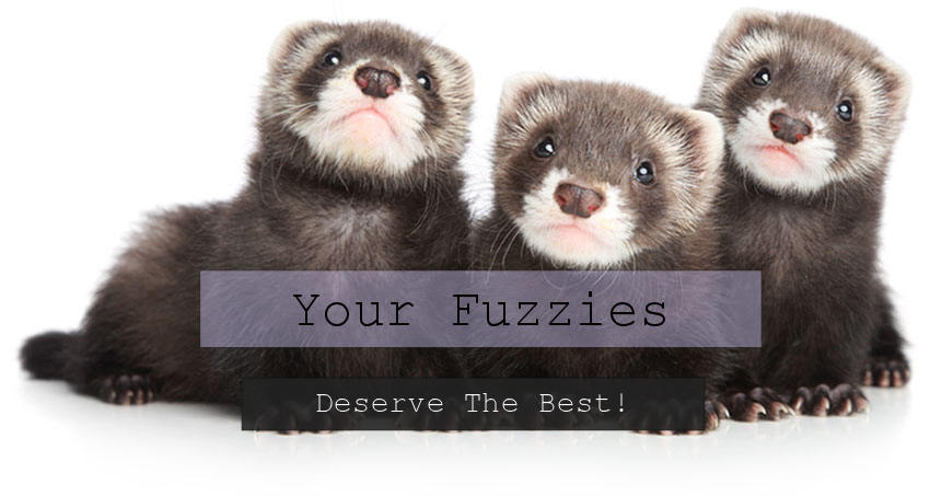 Your Fuzzies Deserve The Best
